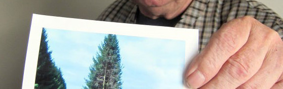23 Bäume umgesägt